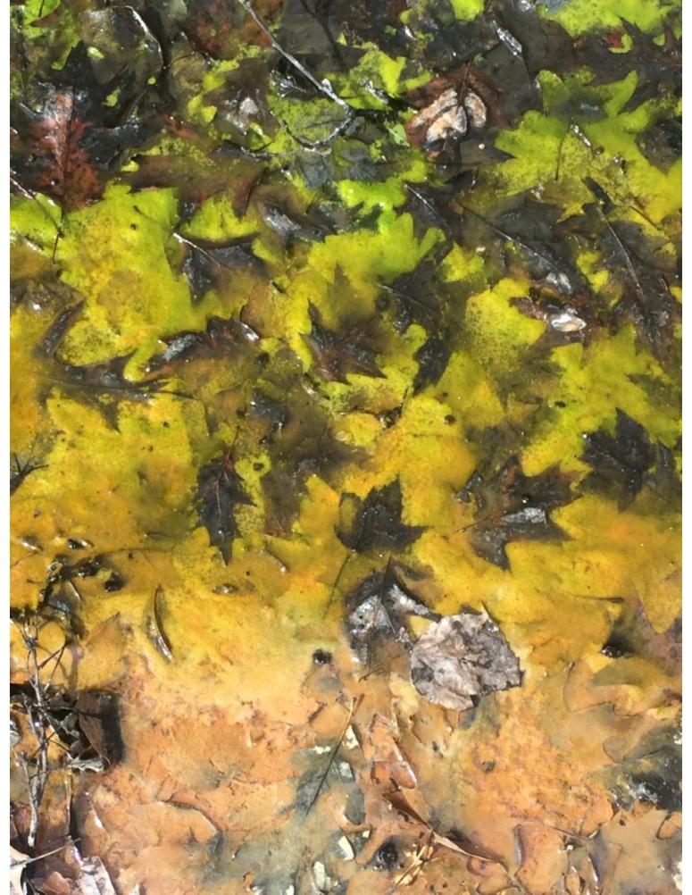 KATIESalgae leavesJPEG